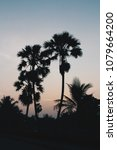 silhouette of palm trees at the ... | Shutterstock . vector #1079664200