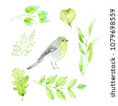 collection bird  greenery... | Shutterstock . vector #1079698559