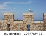 seagull on the castle stone wall | Shutterstock . vector #1079769473