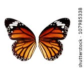 Butterfly Wing Isolated On...
