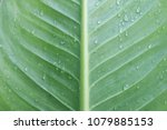 green leaf nature background | Shutterstock . vector #1079885153