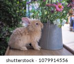 rabbit with flower | Shutterstock . vector #1079914556