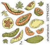 papaya sketch set. tropical...   Shutterstock .eps vector #1079942204