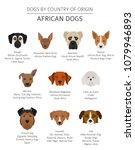 dogs by country of origin.... | Shutterstock .eps vector #1079946893