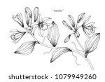 vanilla flower drawing... | Shutterstock .eps vector #1079949260