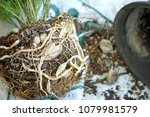 The Roots And Bulbs Of Plant ...