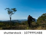 A horse eating grass on the hill. Royalty high quality free stock image of the alone horse on a mountain in the morning