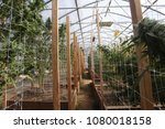 Small photo of Cannabis Growing - Grow Room