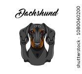dachshund dog. rock gesture.... | Shutterstock .eps vector #1080060200