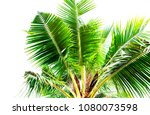 detail of coconut trees with... | Shutterstock . vector #1080073598