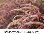 dark reed flower.