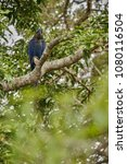 hyacinth macaw on a palm tree...   Shutterstock . vector #1080116504