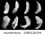 set of white feathers isolated... | Shutterstock . vector #1080120194