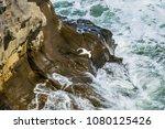 gannet flys down wild coastline ...   Shutterstock . vector #1080125426