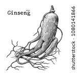 ginseng hand drawing vintage... | Shutterstock .eps vector #1080141866