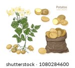 detailed botanical drawings of... | Shutterstock .eps vector #1080284600
