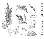 collection of quinoa flowering... | Shutterstock .eps vector #1080285404