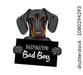 dachshund dog criminal. police... | Shutterstock .eps vector #1080294293