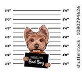 Yorkshire Terrier Criminal....