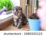 Cute Kitten Near Bucket With...