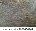 Small photo of Natural tree trunk texture in random horizontal curvy jiggle lines with some bumps visible. For background or backdrop.