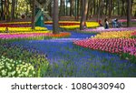 rose flower garden at hitachi... | Shutterstock . vector #1080430940