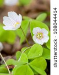 Common Wood Sorrel Is A Plant...