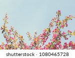 spring blossom with pink tree...   Shutterstock . vector #1080465728