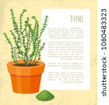 thyme spice plant pattern...   Shutterstock .eps vector #1080483323