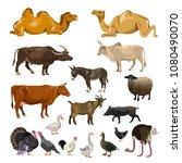 farm animals set. vector... | Shutterstock .eps vector #1080490070