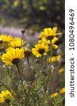 closeup of underside wild... | Shutterstock . vector #1080496469