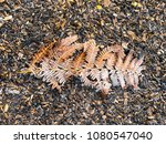 Frosty Fern On Ground