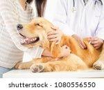 veterinarian checking the dog... | Shutterstock . vector #1080556550