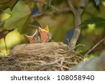 Two Baby Robins With Mouths...