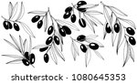 olive tree in a vector style... | Shutterstock .eps vector #1080645353