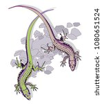 two lizard on white background  ... | Shutterstock .eps vector #1080651524