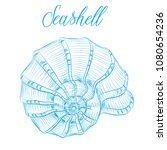 Nautilus Sea Shell Hand Drawn...