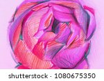 peony with colored pencils.... | Shutterstock . vector #1080675350