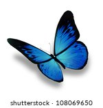 blue butterfly flying  isolated ... | Shutterstock . vector #108069650