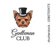 yorkshire terrier gentleman.... | Shutterstock .eps vector #1080705473