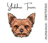 yorkshire terrier portrait.... | Shutterstock .eps vector #1080705563