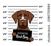 german shorthaired pointer dog... | Shutterstock .eps vector #1080705884