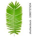 green leaves  white background. | Shutterstock . vector #1080737654