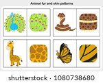 flashcards animal fur and skin... | Shutterstock .eps vector #1080738680