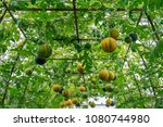 three dimensional cultivation...   Shutterstock . vector #1080744980
