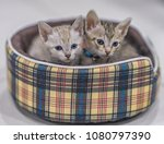 two cute kittens in a basket. | Shutterstock . vector #1080797390