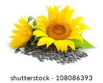 Yellow Sunflowers And Sunflower ...