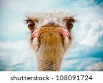 Stock photo ostrich portrait 108091724