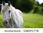 White Horse Portrait. The Face...