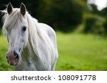 White Horse Portrait. The Face...